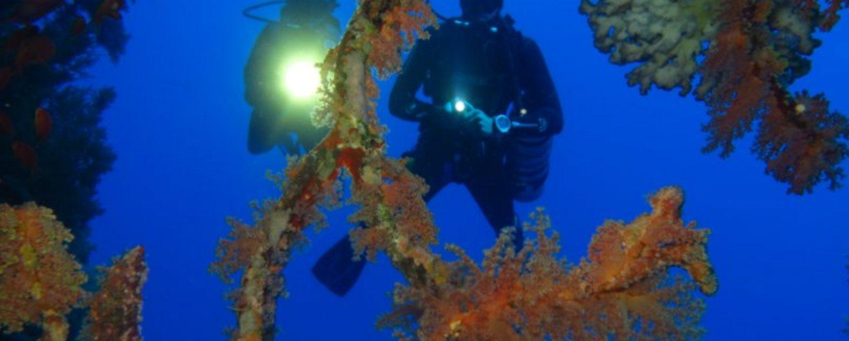 Winter offer for Euro-Divers Egypt
