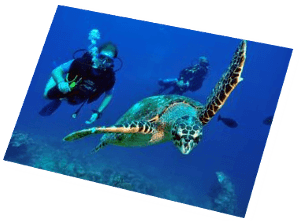 Scuba diving with turtle Euro-Divers Maldives