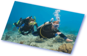 padi diving courses euro divers