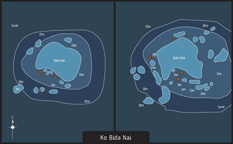 diving phi phi bida nai