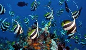 Protéger la biodiversité marine et l'environnement