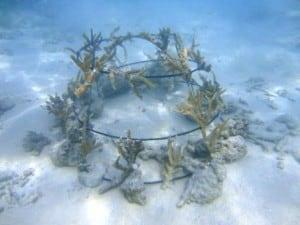 Plantez du corail avec vos proches et contribuez à un meilleur environnement