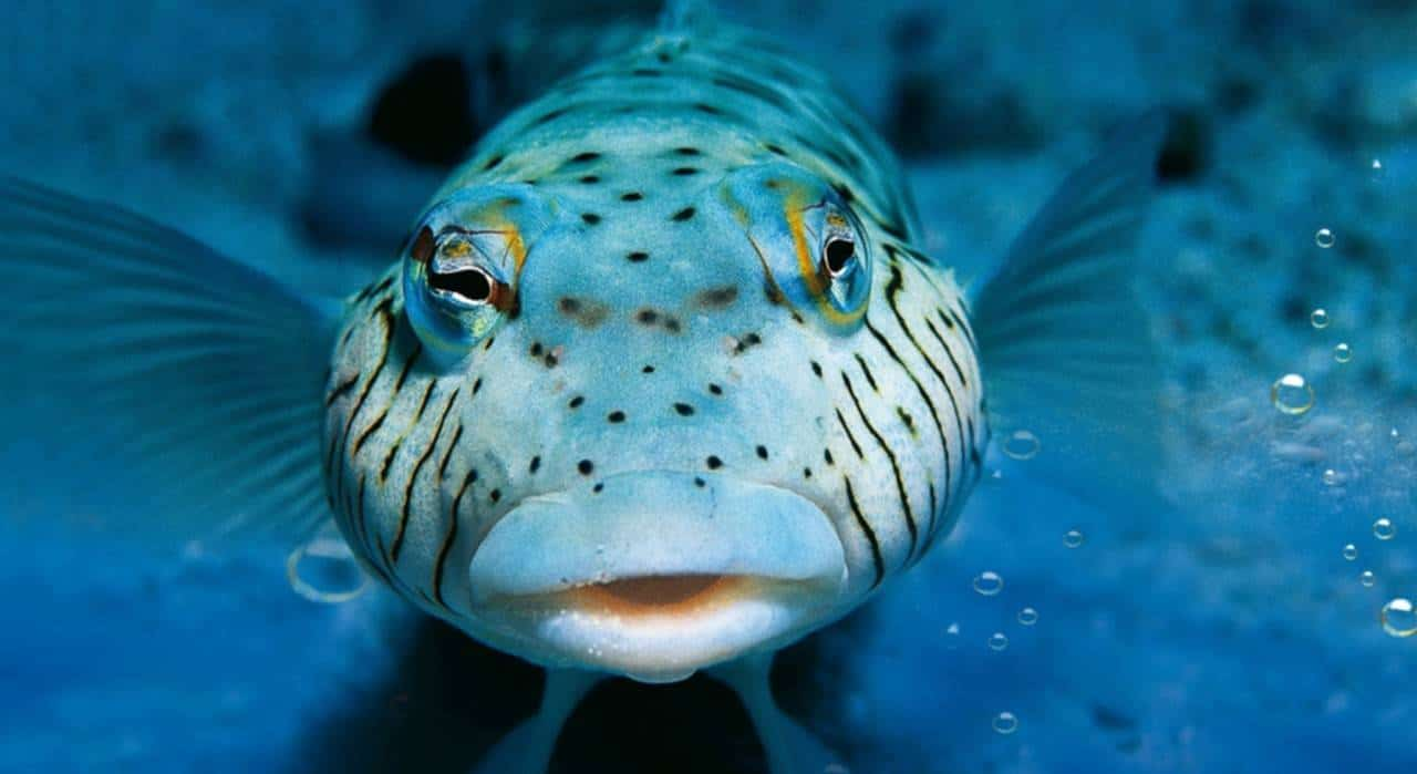 Scuba diving, diving lessons and dive trips with Euro-Divers