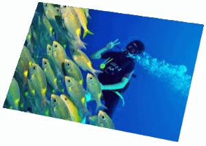 fusilliers scuba diving