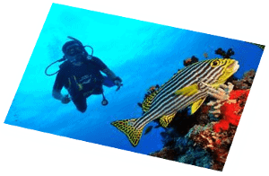 scuba diving with euro divers