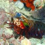 Dive Dhigurah Arches with Euro-Divers Vilamendhoo Maldives