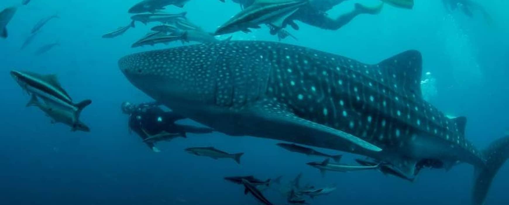 Newsflash Euro-Divers Club Med Phuket
