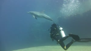 scuba diving dolphins red sea egypt euro divers utopia beach club