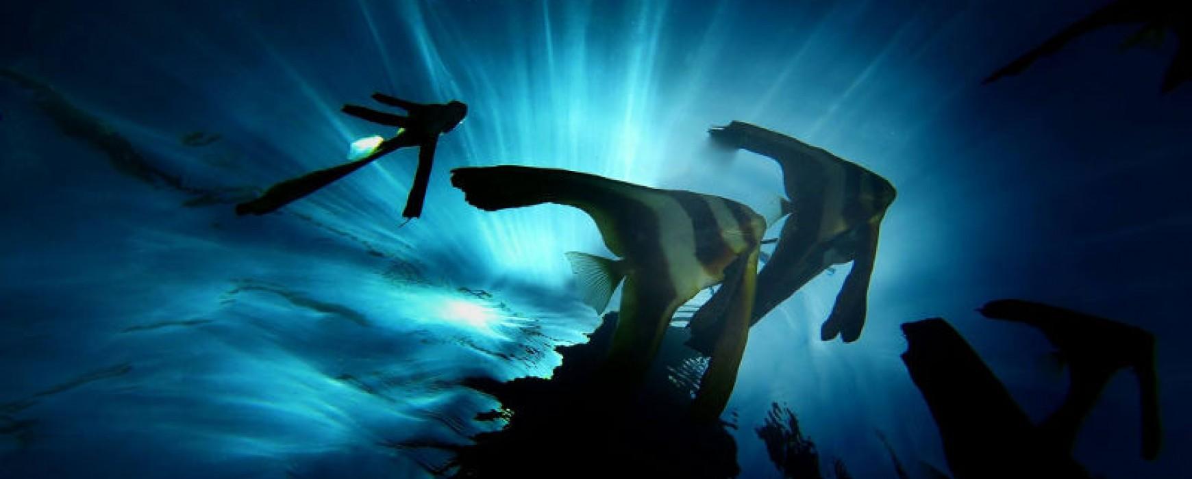 Unterwasser Foto- workshop Wettbewerb April 2016