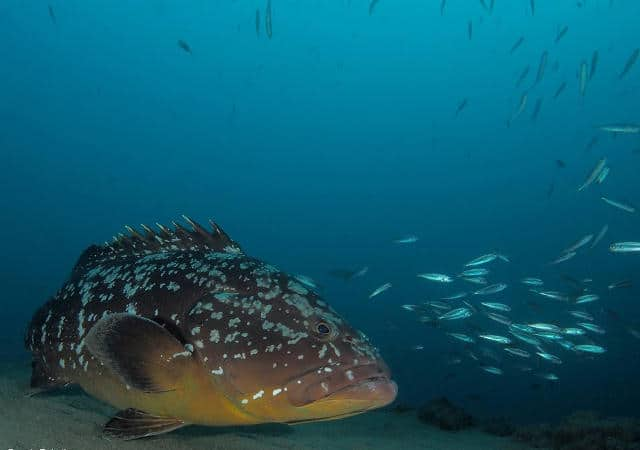 diving canary islands