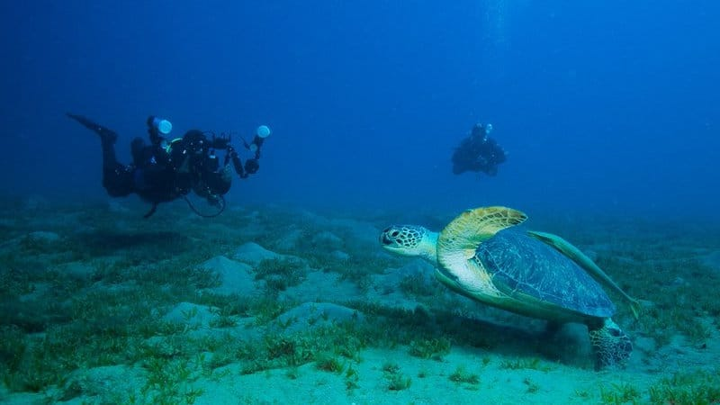 diving turtle egypt