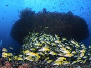 variété récifs maldives