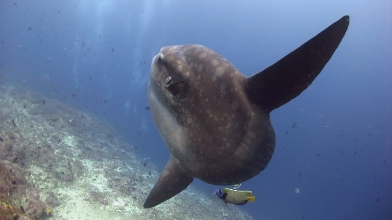diving with the big 5 in maldives
