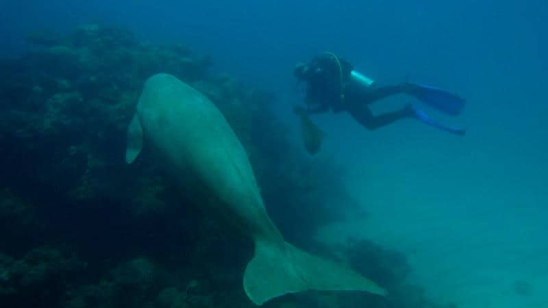 2 summer diving hurghada