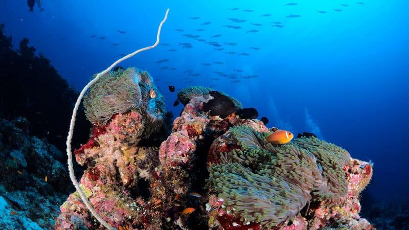 3 euro divers maldives amari havooda