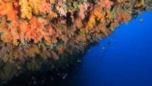 coral reef kagi maldives