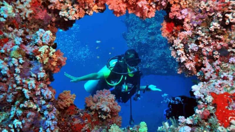 dive no certification course