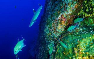 reef life maldives