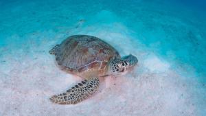 Turtle snorkeling trip
