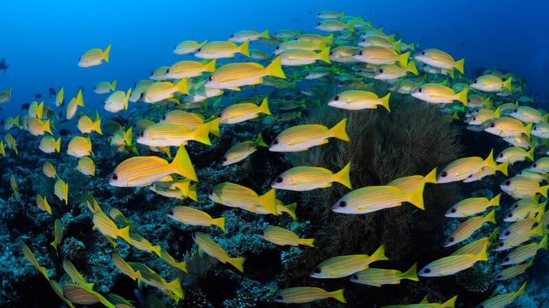 Tauchen im Nord Male Atoll