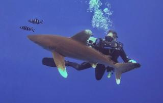 Spectacular Diving in Egypt's Southern Red Sea