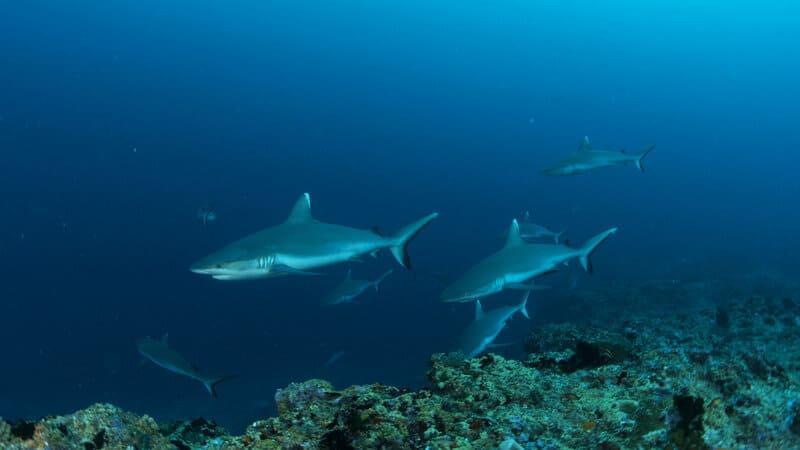 3 diving maldives north male atoll