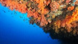 1 great scuba diving snorkeling experiences