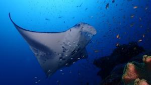 1 padi 5 stars dive center raa atoll