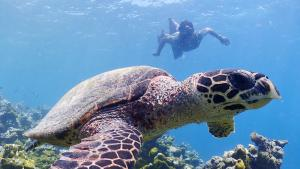 3 diving gaafu dhaalu atoll maldives