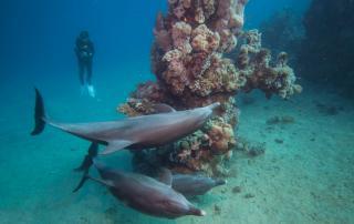 padi discover diving