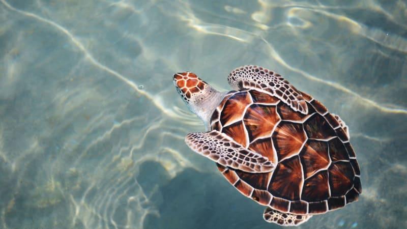 Protégeons les tortues de mer en voie de disparition 2