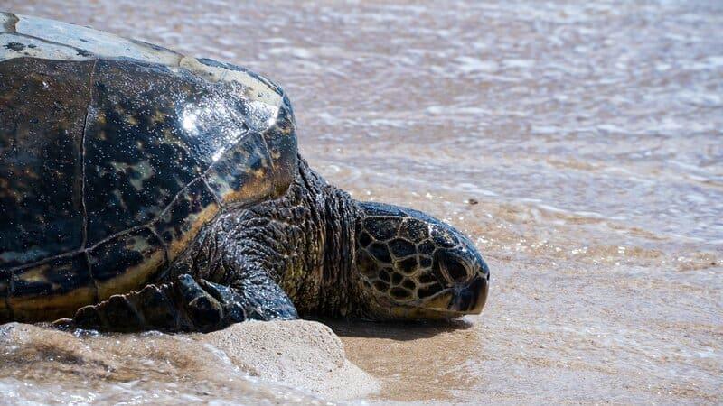 2 protecting endangered sea turtles