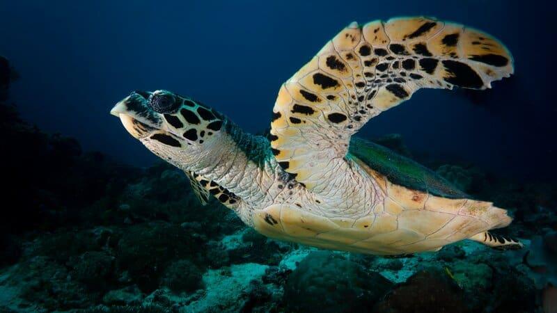 3 protecting endangered sea turtles