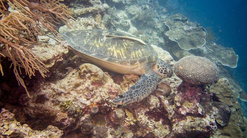 Protégeons les tortues de mer en voie de disparition 4