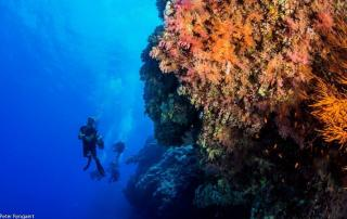 1 best dive dites egypts southern red sea