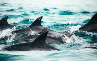 2 world oceans day 2021