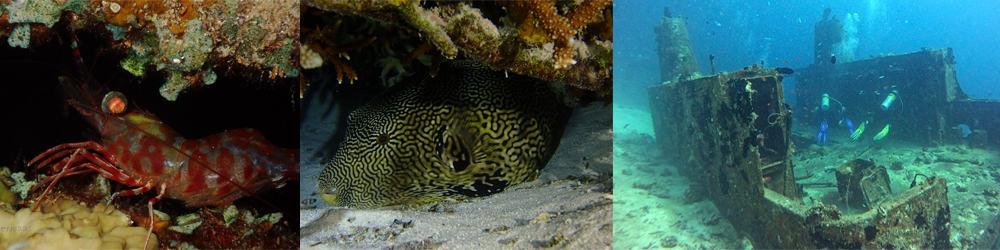 Night Scuba Diving In The Maldives 6