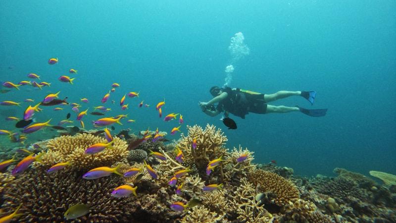 divinmg maldives house reef