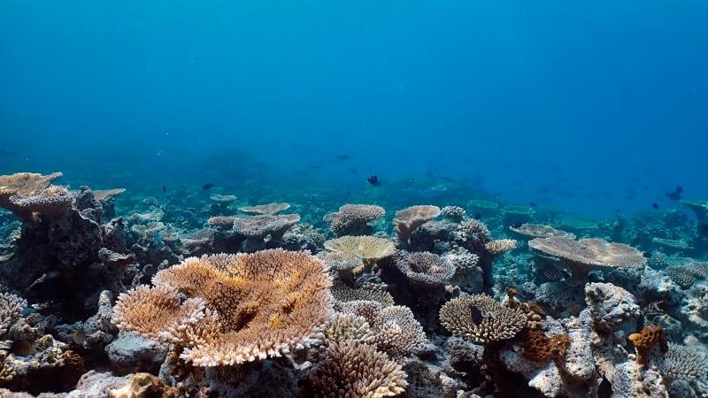 3 amari maldives house reef