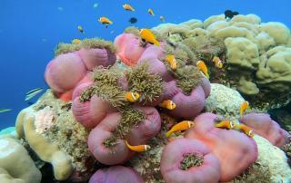 diving maldives house reef amari
