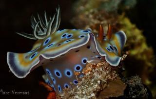 3 macro critters big fish maldives