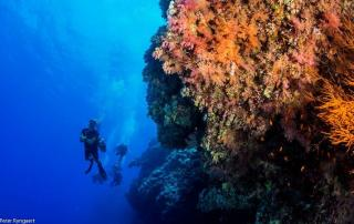 education padi scuba diving