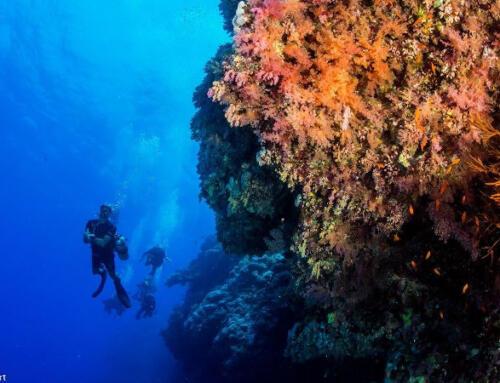 Verbessern Sie Ihre Tauchfähigkeiten im südlichen Roten Meer Ägyptens