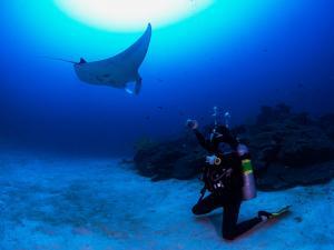 1 manta ray season in maldives