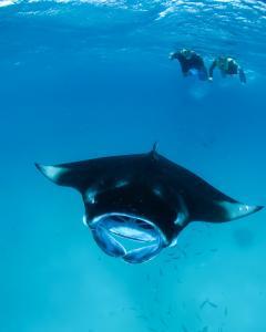 3 manta ray season in maldives