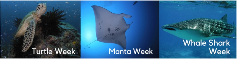 turtles mantas and whale sharks
